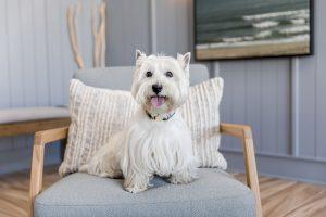 pet friendly luxury apartment